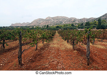 vineyard and mountain in the background- Crete, Greece