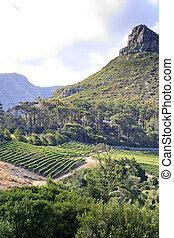 Vineyard and mountain peak