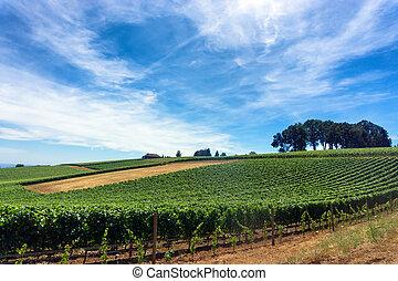 Vineyard and Sky - Vineyard for Pinot Noir wine in Oregon...