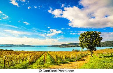 Vineyard and tree on Corbara Lake, Orvieto, Umbria Italy