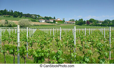 Vineyard and winery in spring near Udine, Italy