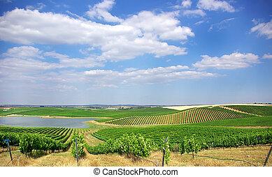 Vineyard at Portugal