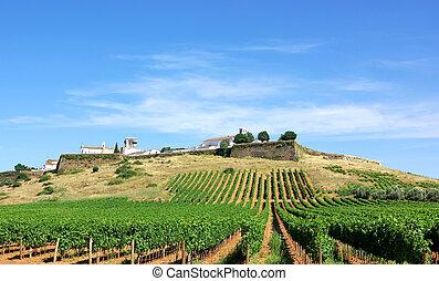 Vineyard at Portugal, Estremoz, Alentejo region.