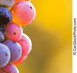 Vineyard at sunset.