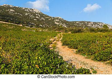 Vineyard at Trstenik
