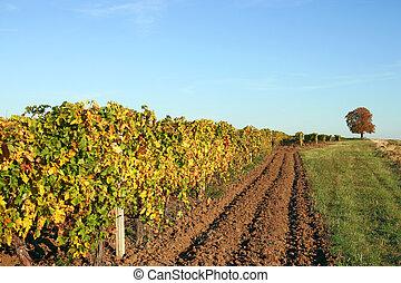 Vineyard autumn season landscape