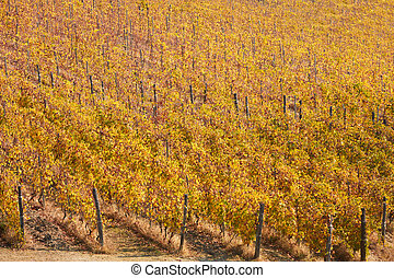 Vineyard background in autumn with yellow leaves, high angle view