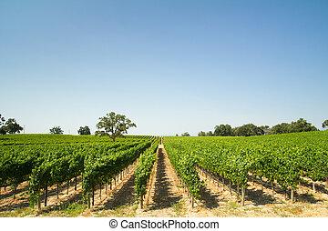 Beautiful vineyard and winery at Sonoma County, California