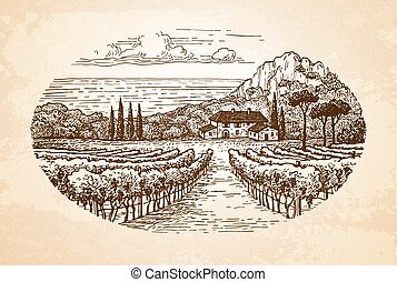 Vineyard by the sea. - Hand drawn rural landscape on old...