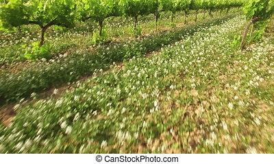 Vineyard Crops in Spring Aerial