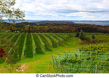 Vineyard field in Old Mission Peninsula Michigan in the...
