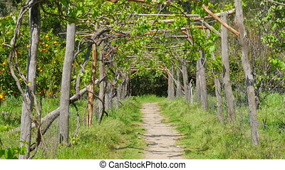 """vineyard footpath, passing through path"""
