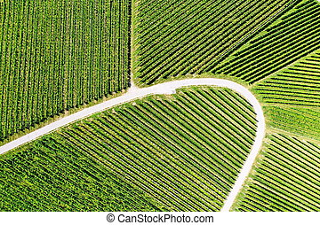 Vineyard from above with paths and roads
