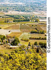 vineyard, Gordes, Provence, France