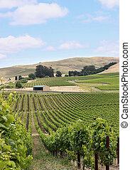 Vineyard hill in napa valley