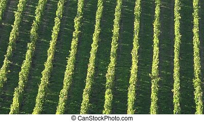 Vineyard hills on the banks of the