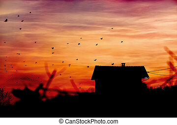 Vineyard house with birds - Vineyard house with flying birds...