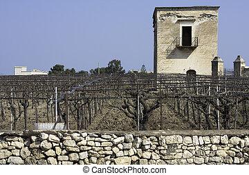 Vineyard in Apulia