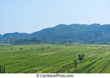 Vineyard in Croatia at the Adriatic coast.
