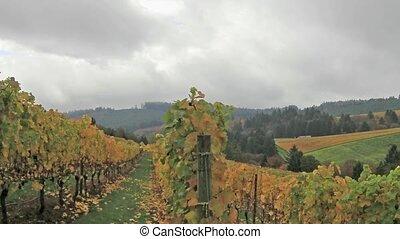 Vineyard in Dundee Oregon in Autumn