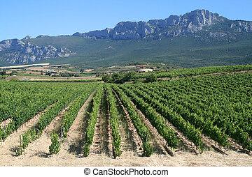 Vineyard in La Rioja, the largest wine producing region in Spain
