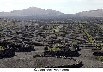 Vineyard in Lanzarote - Typical vineyard in La Geria, ...