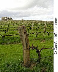 Vineyard in Margaret River region, Wester Australia