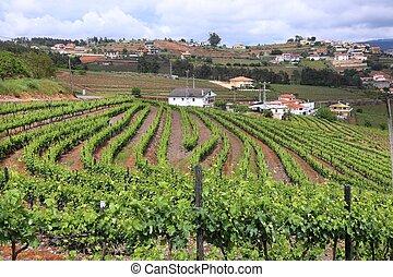 Vineyard in Portugal