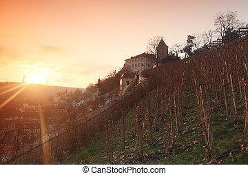 vineyard in prague