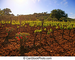 vineyard in Provence, France - Panoramic landscape with...