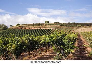 Vineyard in Spain - Spanish wineyard in La Rioja