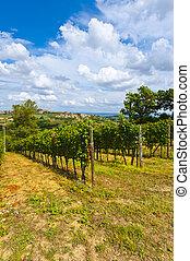 Vineyard in the Autumn