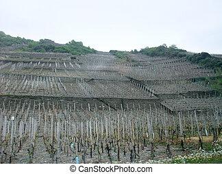 vineyard in the Eifel