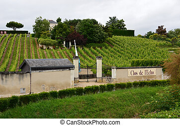Vineyard in the famous wine making region - Loire Valley , France