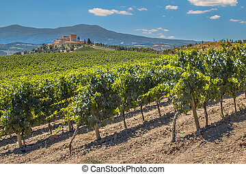 Vineyard in the hills - Castle Overseeing Vineyards with...