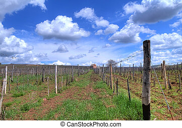Vineyard in Tokaj - Vineyard in the Tokaj hills in North ...