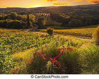 hills in Tuscany, Italy, during the October grape harvest