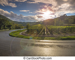 vineyard in Tuscany, Italy - vineyards in a Tuscan road bend...