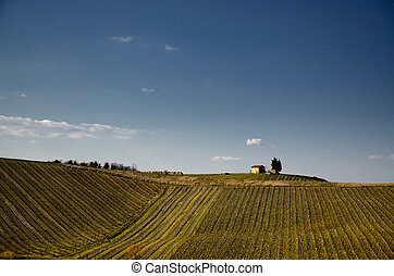 Vineyard in tuscany - italy - Vineyard with trees and a...