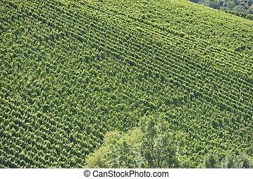 vineyard landscape #1, Stuttgart