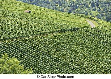 vineyard landscape #2, Stuttgart