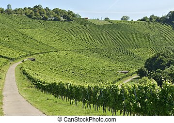 vineyard landscape #3, Stuttgart