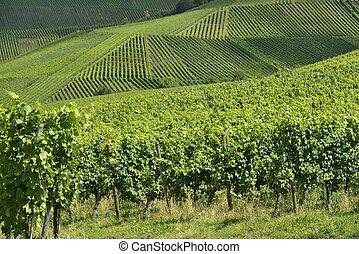 vineyard landscape #4, Stuttgart