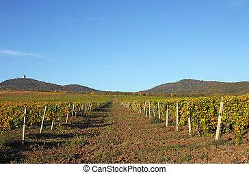 Vineyard landscape autumn season agriculture