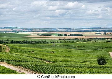 Vineyard landscape in France