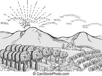 Vineyard landscape one sunny day