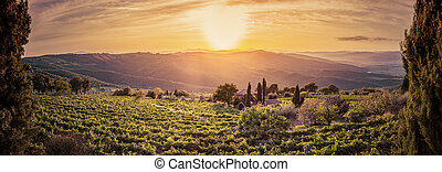 Vineyard landscape panorama in Tuscany, Italy. Wine farm at sunset
