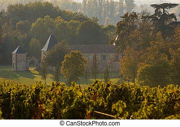 Vineyard landscape, Vineyard south west of France, Europe