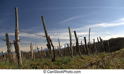 Vineyard landscape - Vineyard with the Pyrenees mountains in...