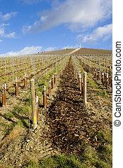 vineyard, Mo?t et Chandon, Ay, Champagne Region, France